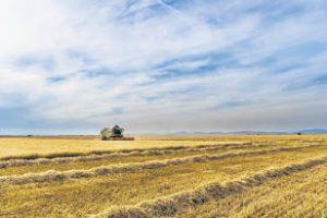 Het aantal boeren in Noord-Nederland daalt